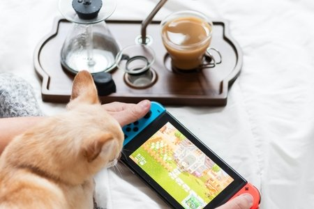 nintendo switch console with cat nearby