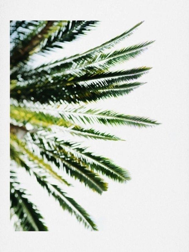 palm wall art
