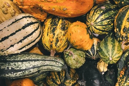 variety of gourds