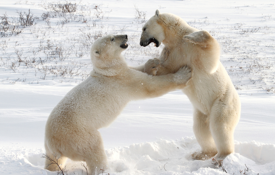 And learn if this is play or fighting - from an expert naturalist.